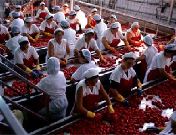 エプロンも赤で統一されるトマト缶の工場の作業風景。圧巻の「赤い」風景です。